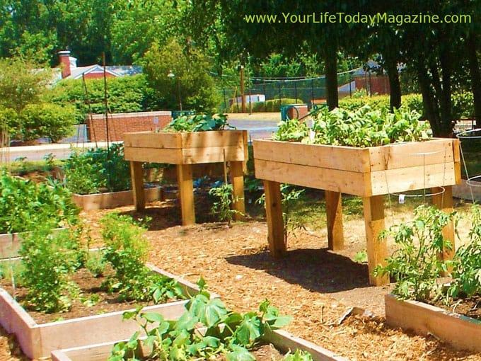 all-about-raised-bed-garden-apieceofrainbowblog (3)