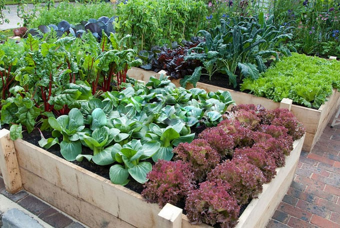All About Raised Beds: Ultimate guide on how to build the most productive raised bed gardens! Lots of tips and resources! - A Piece Of Rainbow