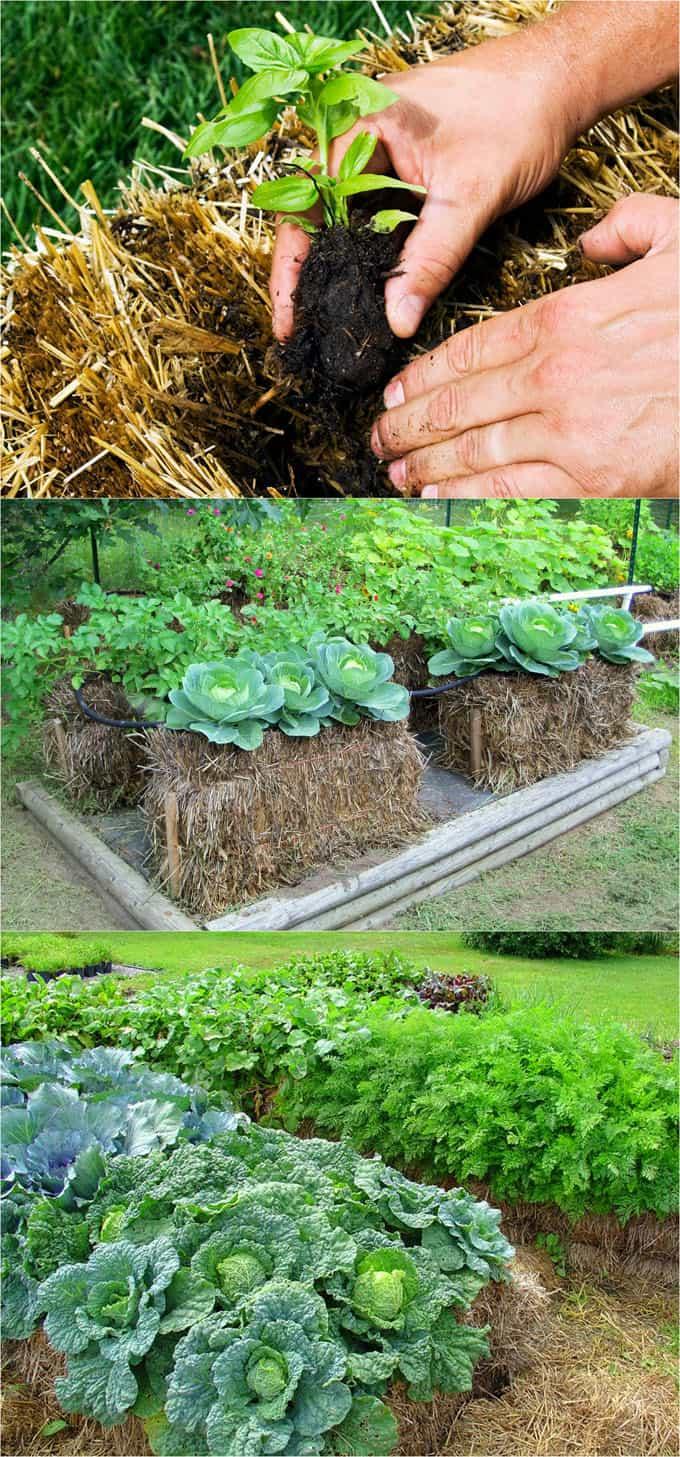 Straw bale gardening ideas