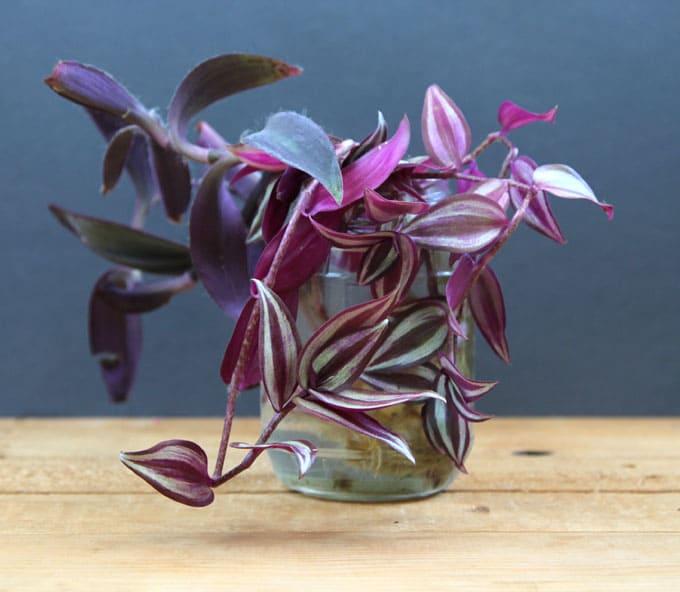 grow-indoor-plants-in-glass-bottles-apieceofrainbow (11)
