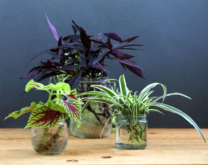 16 Colorful Shade Garden Pots And Plant Lists A Piece Of