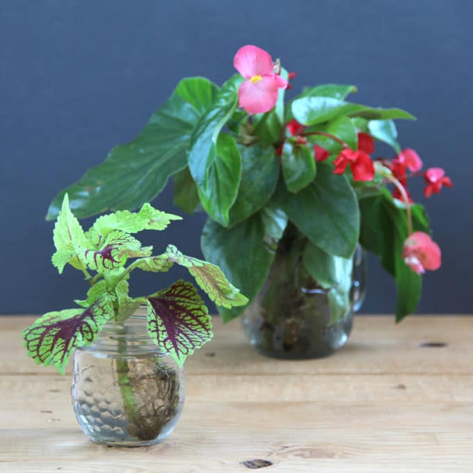 Indoor Plants Grown In Water: Magical DIY Hanging Mason Jar Lights (Easiest Ever!)
