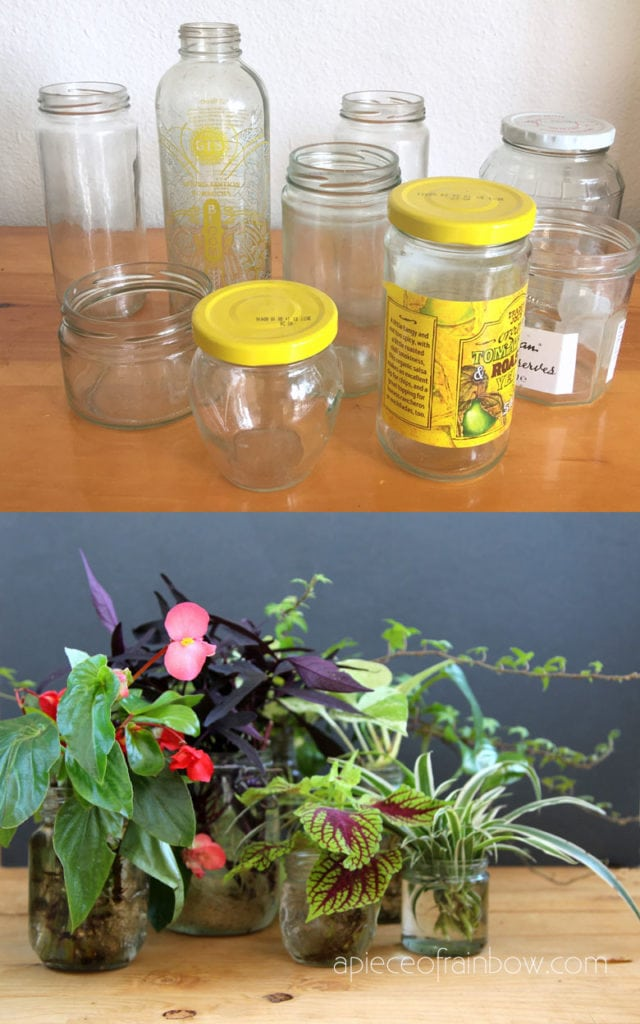 Grow Beautiful Indoor Plants In Water So Easy A Piece Of Rainbow