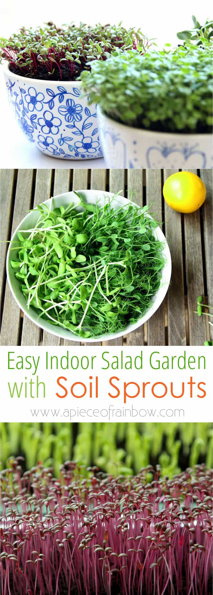 Grow an Indoor Salad Garden with Soil Sprouts