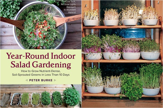Grow an indoor salad garden with soil sprouts a piece of rainbow - Salads can grow pots eat fresh ...