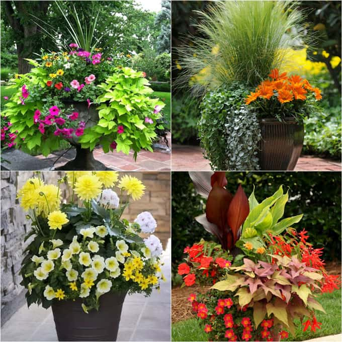 24 Stunning Container Garden Planting Ideas A Piece Of Rainbow
