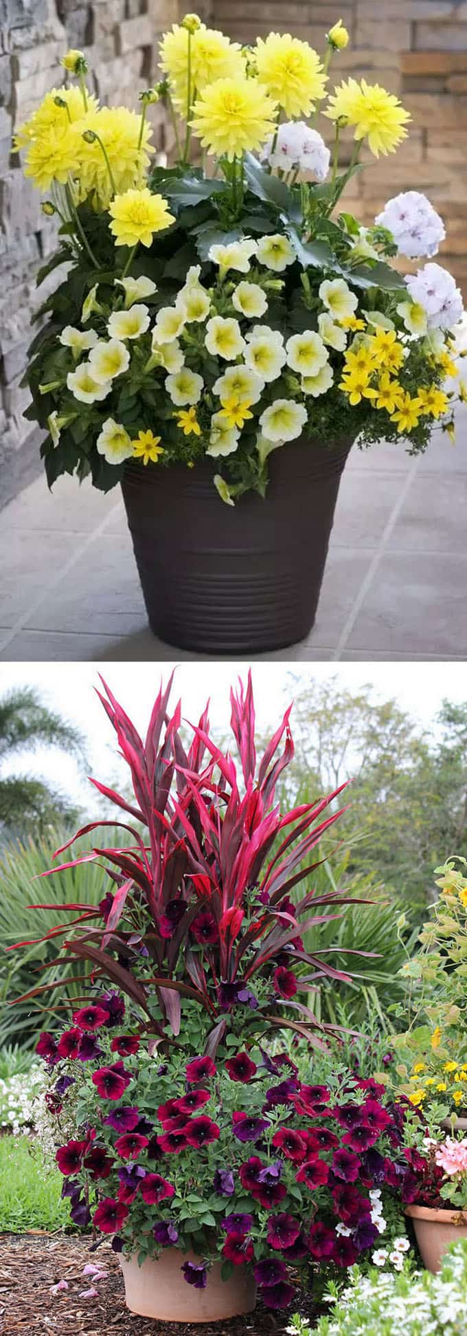 all yellow and all purple container garden designs