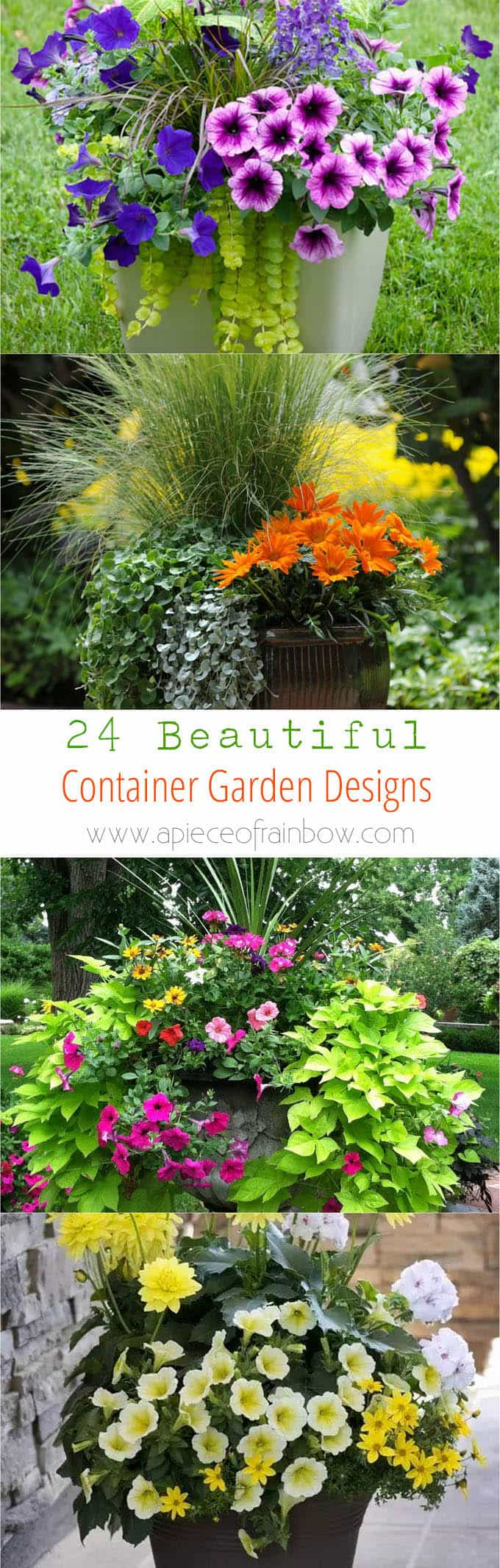 colorful container garden plants