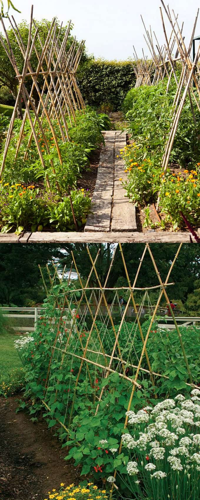Bamboo Poles Are Strong Yet Light Weight, Which Makes Them Easy To Work  With. This Type Of Garden Trellis Is Great For Growing Tomatoes, Beans,  Cucumbers, ...