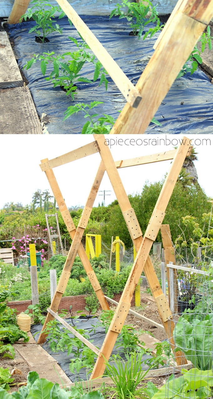 diy tall tomato cage for growing vertical