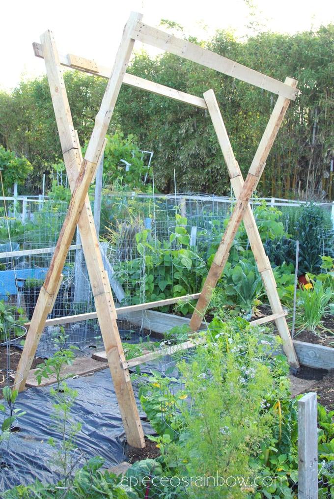 DIY tall tomato cage trellis