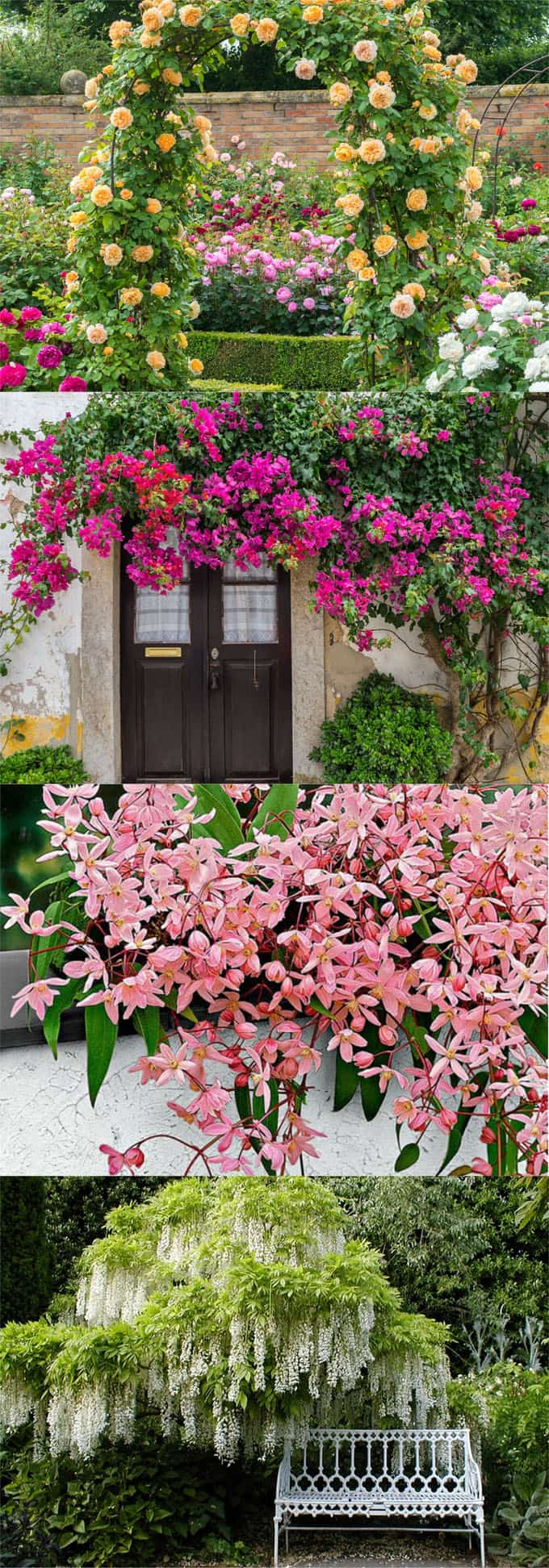 20 Favorite Flowering Vines And Climbing Plants A Piece