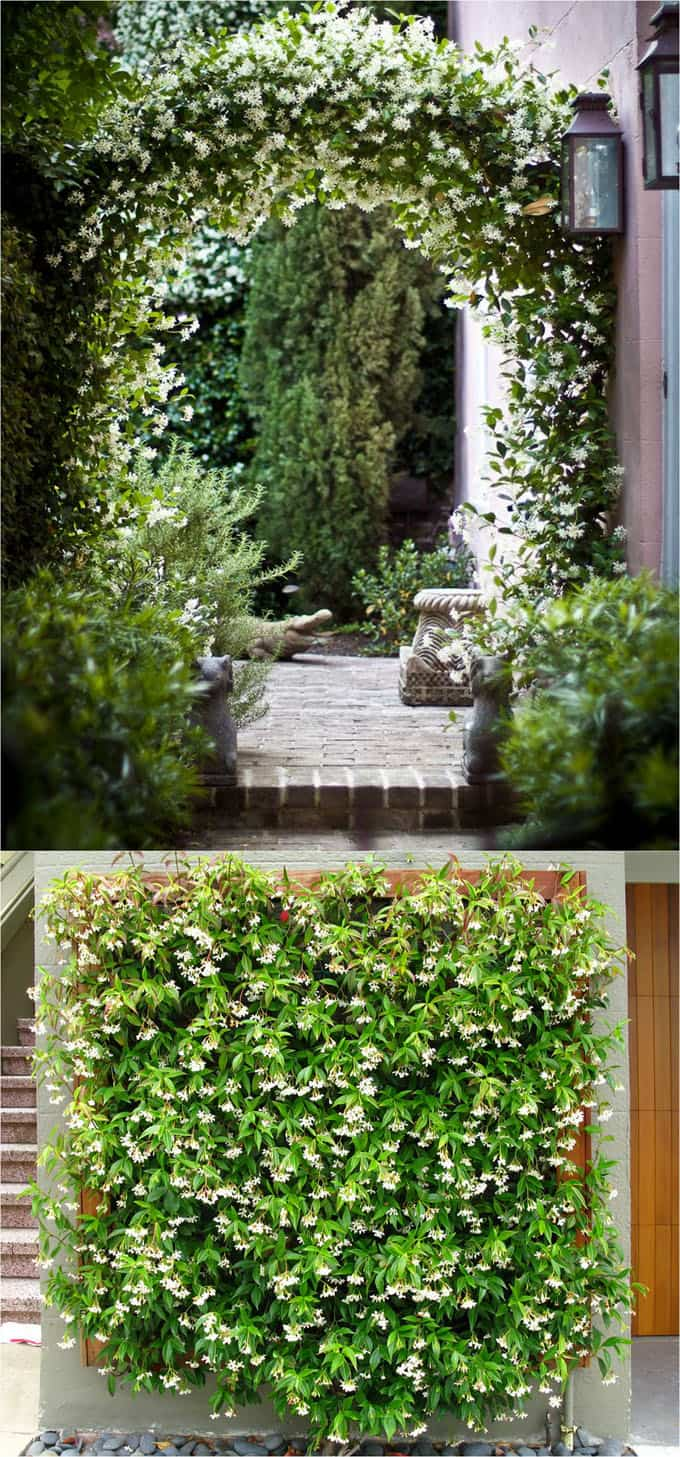 20 Favorite Flowering Vines And Climbing Plants Page 2