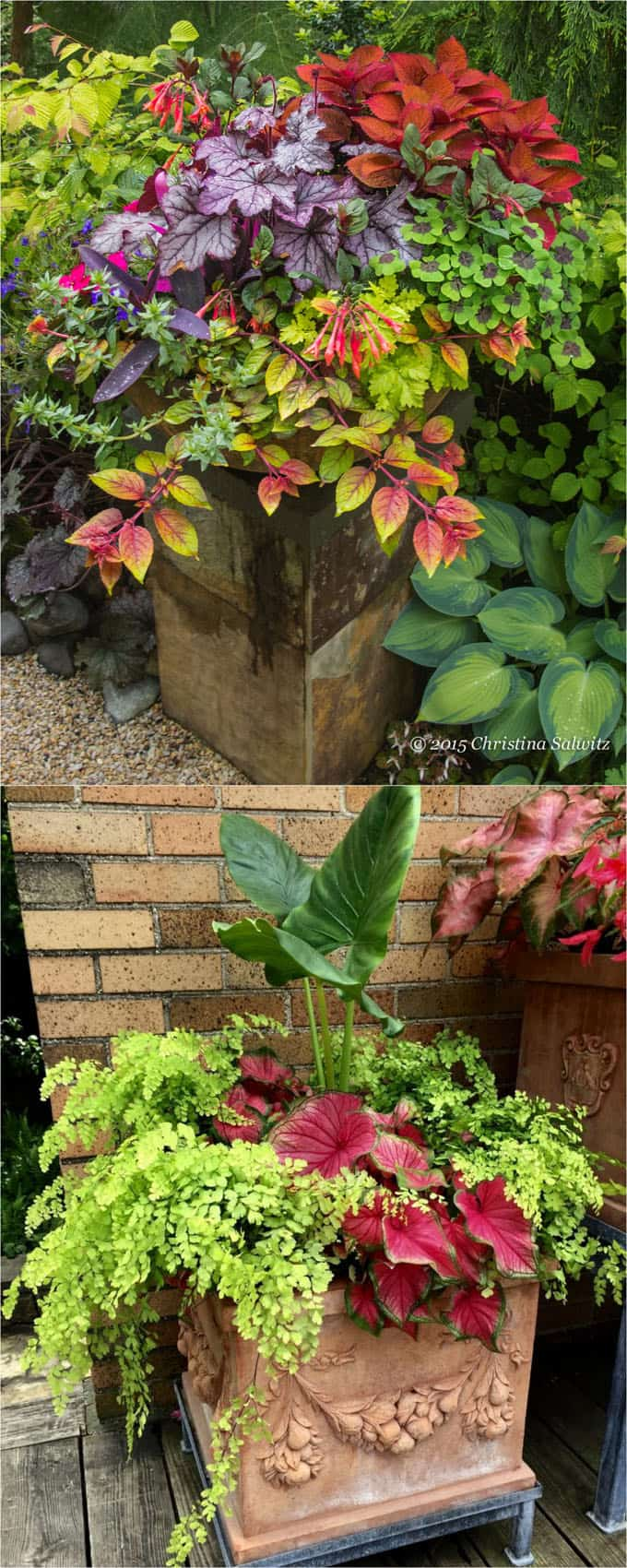 shade garden containers and pots with colorful foliage