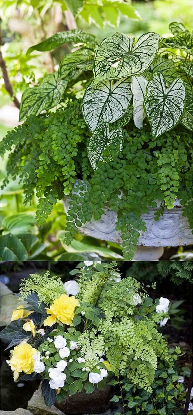 shade garden pots with white and green plantings