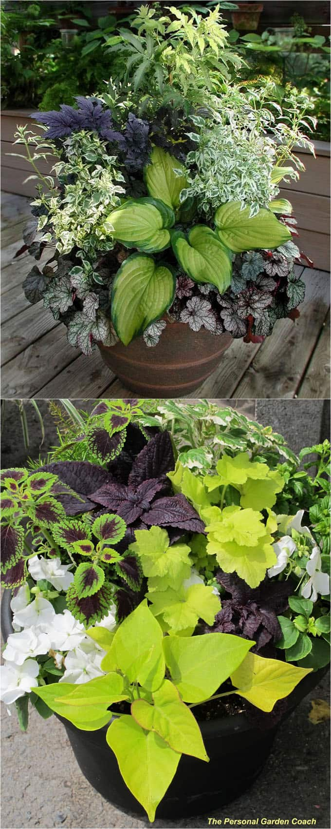 purple and green shade garden planters and pots