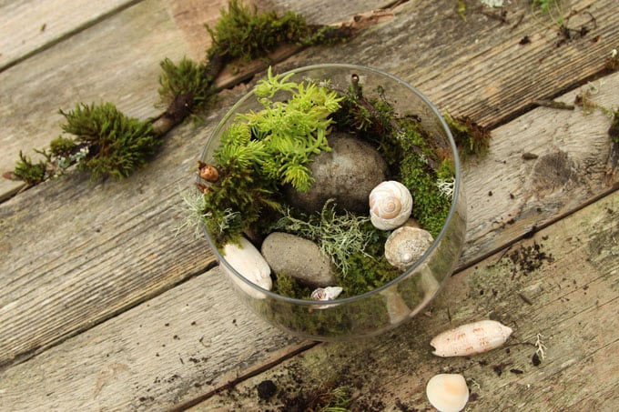 Beautiful Diy Terrarium In 3 Easy Steps A