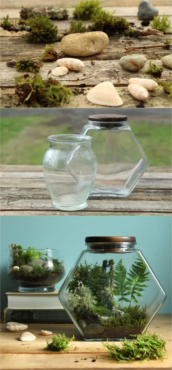 ... To Make More Professional Looking And Longer Lasting Terrariums, You  Donu0027t Need Special Supplies To Create A Little Living Paradise In A Glass  Jar.