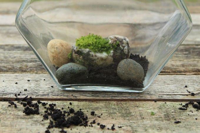 Beautiful Diy Terrarium In 3 Easy Steps A