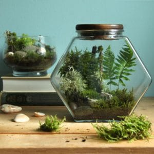 Detailed tutorial on how to make a beautiful DIY terrarium easily and create a living paradise in a glass jar that stays healthy with very little care. | apieceofrainbow.com