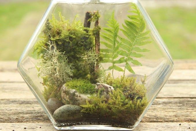 Beautiful DIY Terrarium Made Easy A Piece Of Rainbow - Amazing diy non living terrarium
