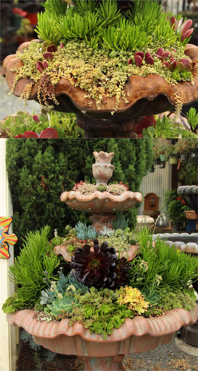 5 Easy Steps From Planting Succulents Succulent Care To Garden Design Secrets