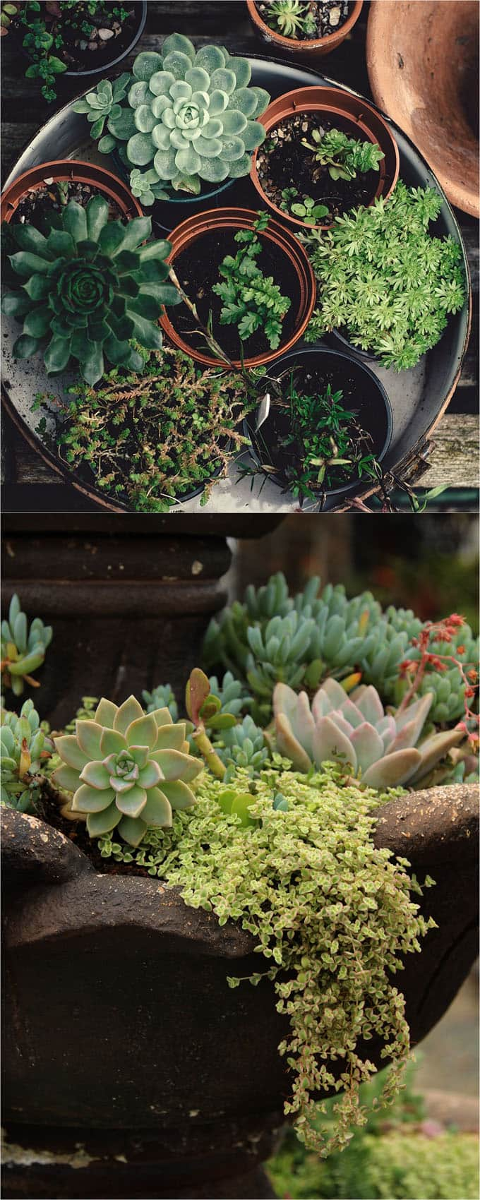 How To Plant Beautiful Succulent Gardens In 5 Easy Steps A Piece Of Rainbow