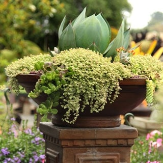 How to create a drop-dead-gorgeous succulent garden in 5 easy steps: with detailed succulent care tips and succulent container garden design secrets. apieceofrainbow.com