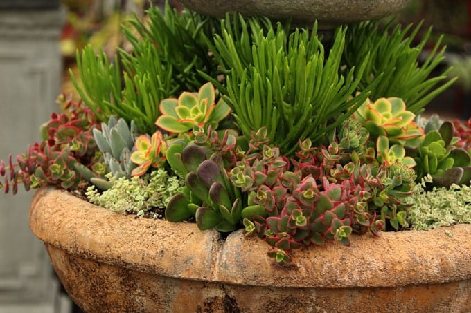Think Scale, Color And Texture In A Succulent Garden