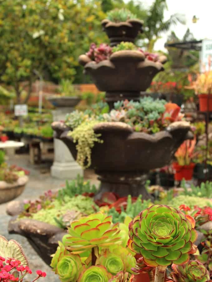 If You Live In A Colder Climate, There Are Still Lots Of Hardy Succulents  To Choose From That Can Even Survive  20 Fahrenheit!