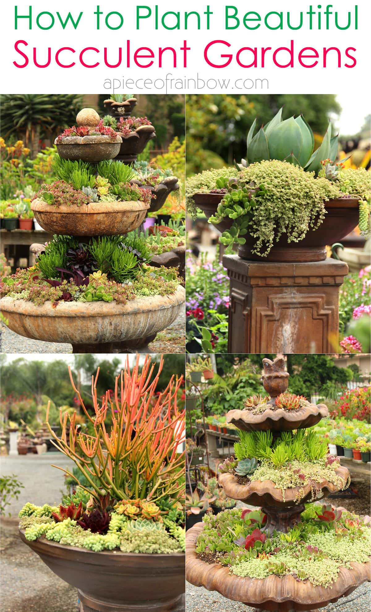 How to plant beautiful & healthy succulent gardens in 5 easy steps! Best design & care tips on sun, soil, water, varieties & container ideas.