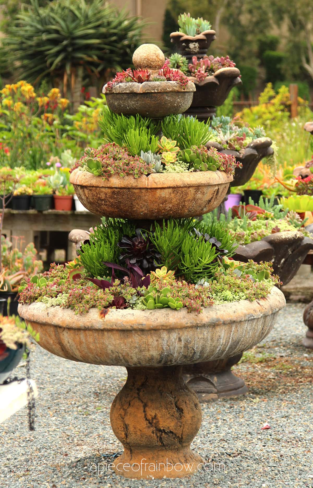 how to plant mixed succulent planter