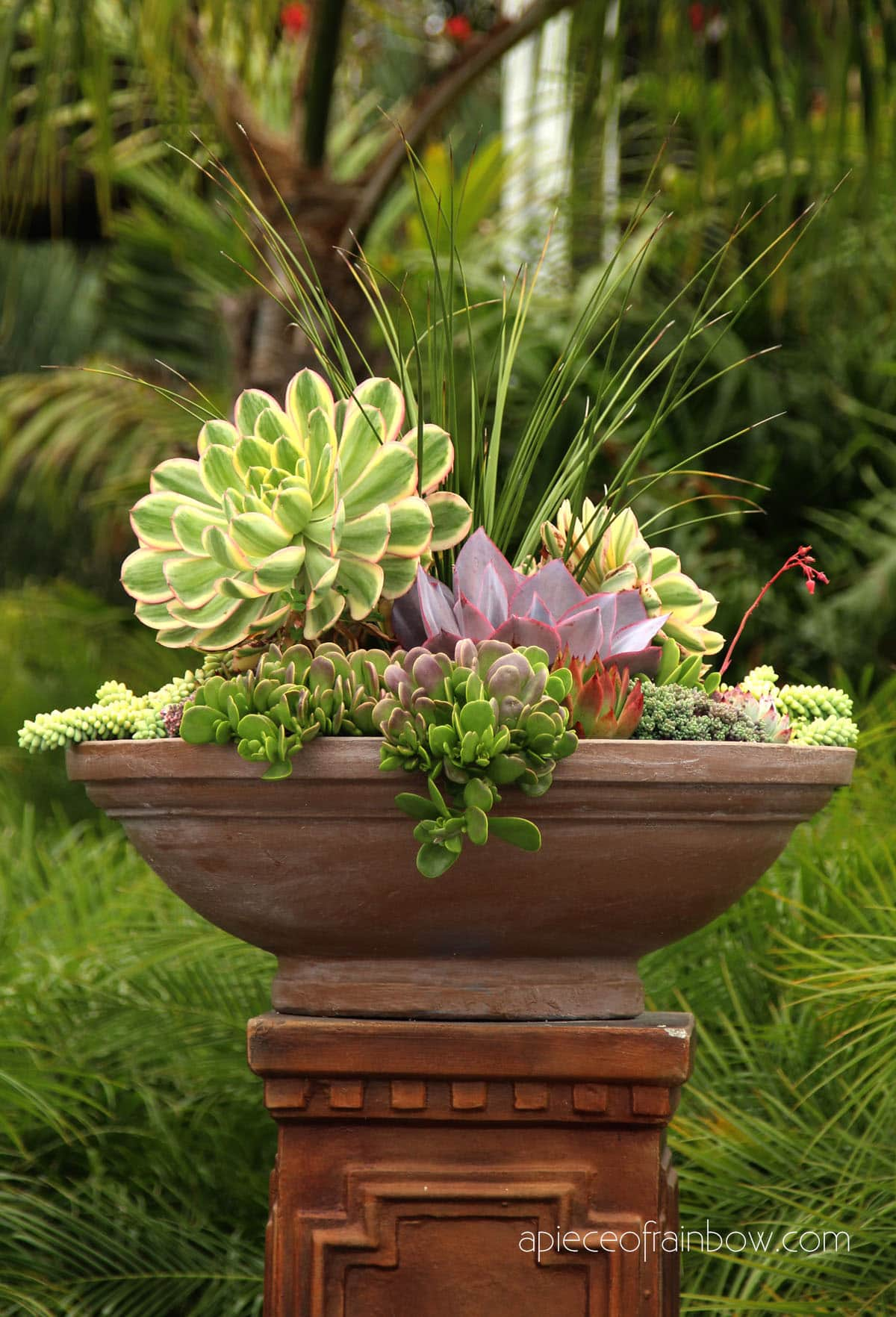 beautiful mixed succulent planter with Aeonium and Donkey Tail