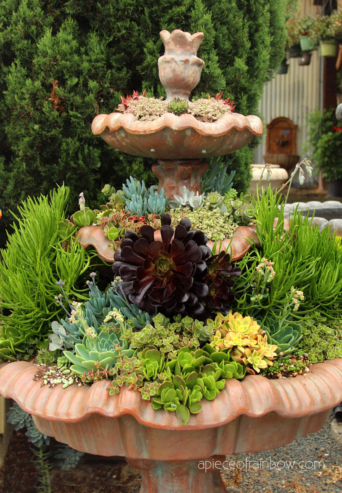 how to plant succulent gardens