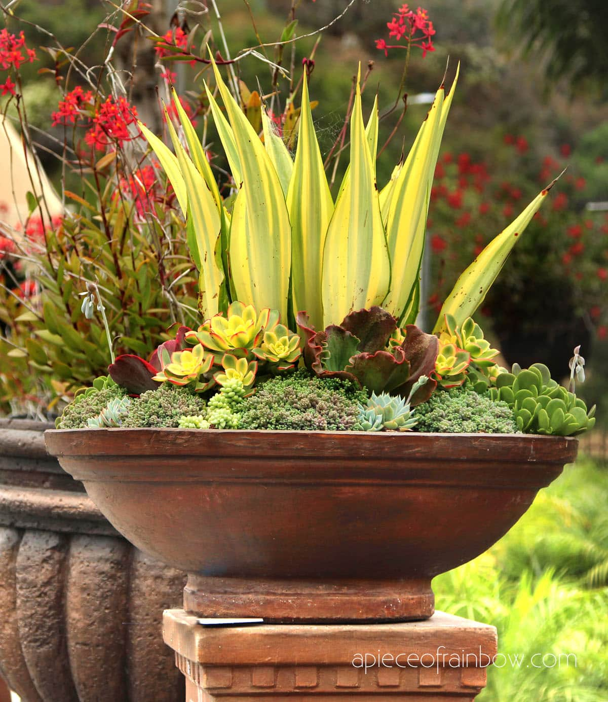 container pot on pedestal with yellow, purple and red succulents