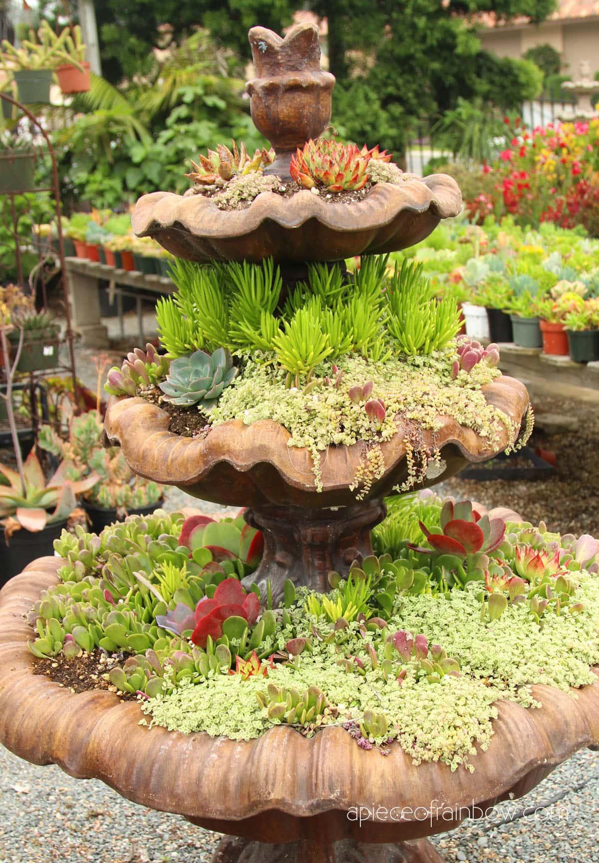 beautiful succulent garden planter
