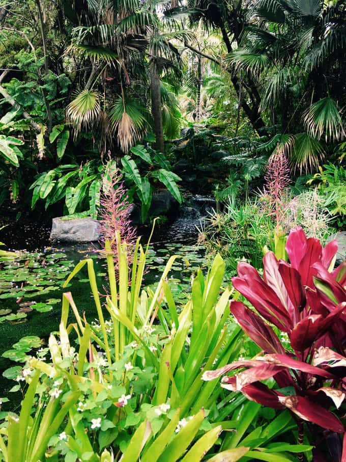 Tropical Rainforest Garden: One Of The Few Places On Mainland USA To  Experience The Deep Tropical Rainforest. Letu0027s Pretend We Are In Hawaii!