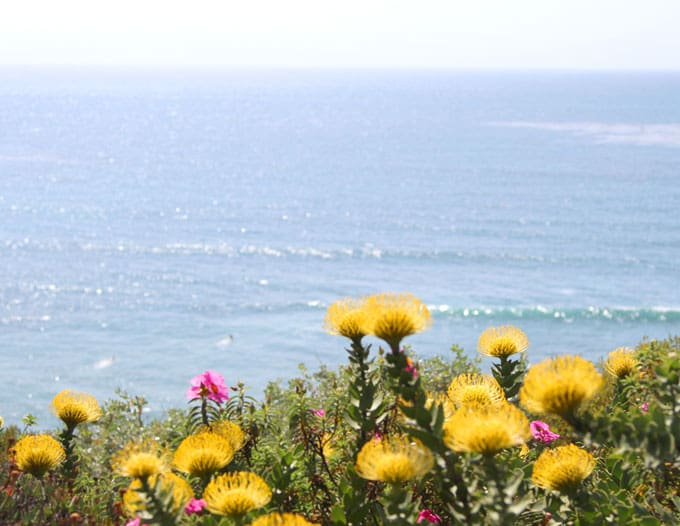 Ocean view from Self Realization Fellowship Meditatyion Garden: so beautiful! 11 magnificent botanical gardens you must see from San Diego to Los Angeles. Visitor info & insider tips - great resources when you visit California!