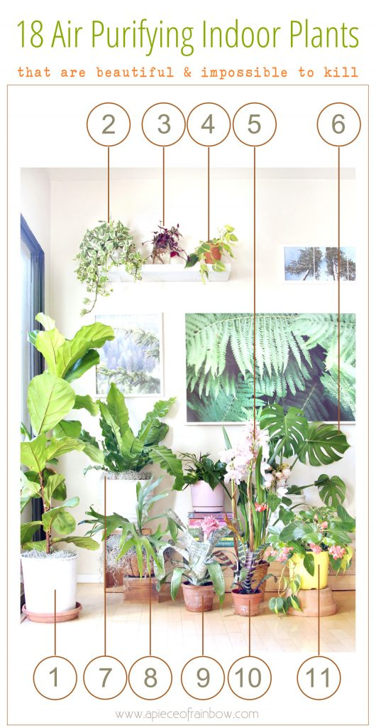 gorgeous indoor garden with 18 best indoor plants