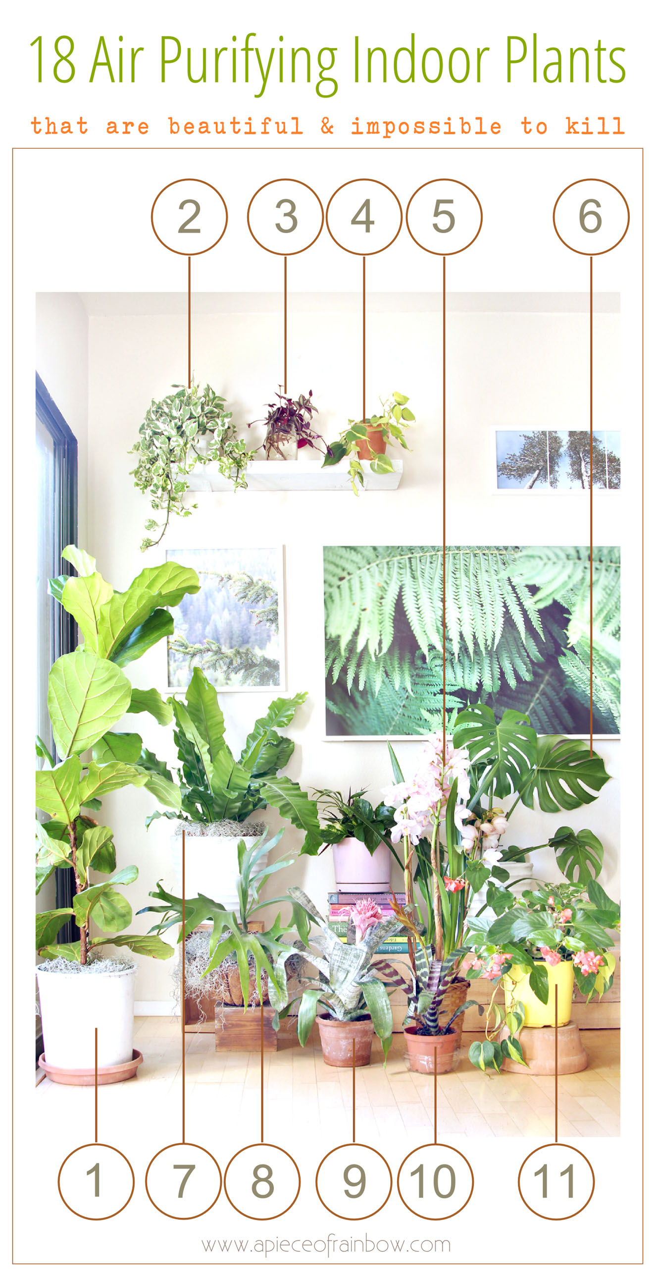 18 Most Beautiful Indoor Plants ( & 5 Easy Care Tips! ) - A Piece ...