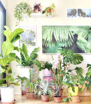 Check out our gorgeous indoor garden with 18 best indoor plants! Plus 5 essential tips on how to grow healthy house plants! Make your home more beautiful with these showy foliage and flowering plants that thrive in low light conditions, and are so easy to grow! - A Piece of Rainbow