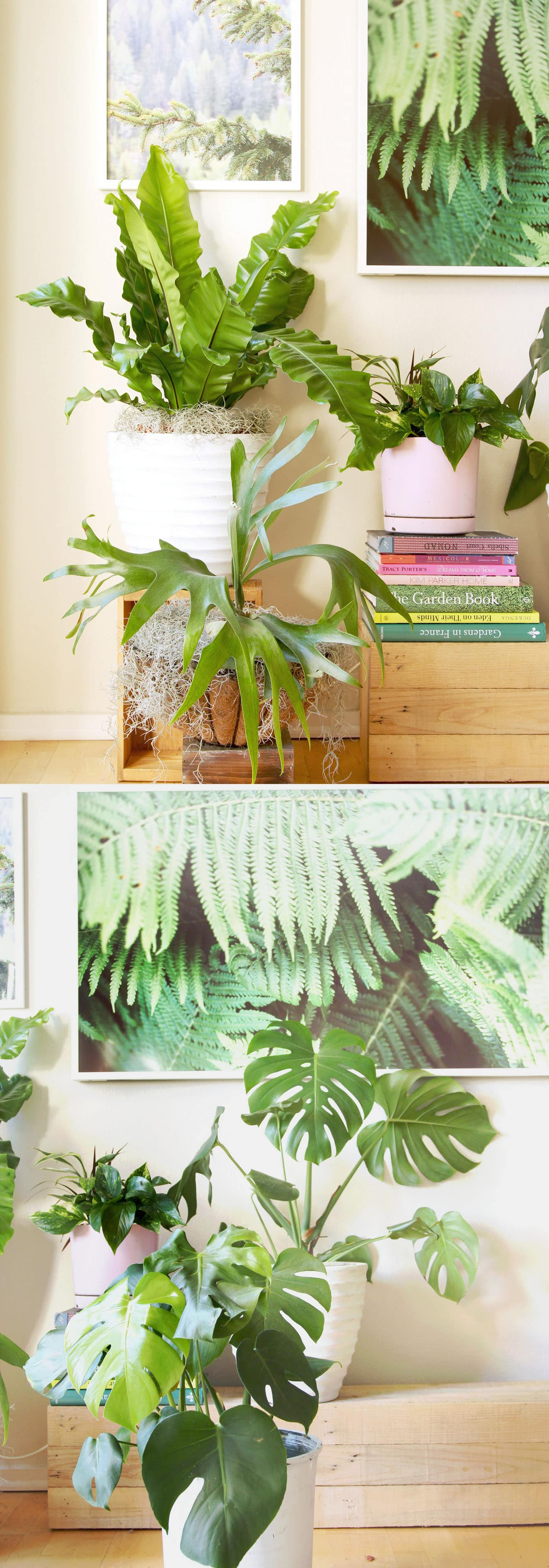 18 most beautiful indoor plants 5 easy care tips a piece of rainbow - Easy care indoor plants ...