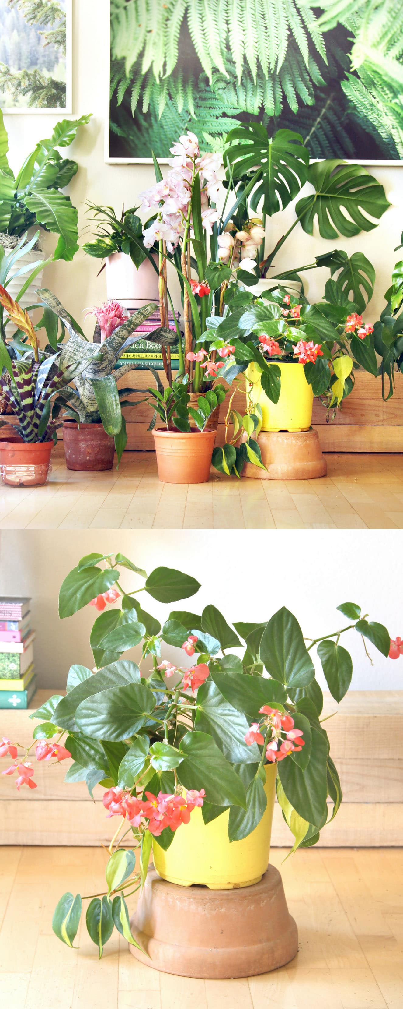 18 most beautiful indoor plants 5 easy care tips for Maintenance of indoor plants