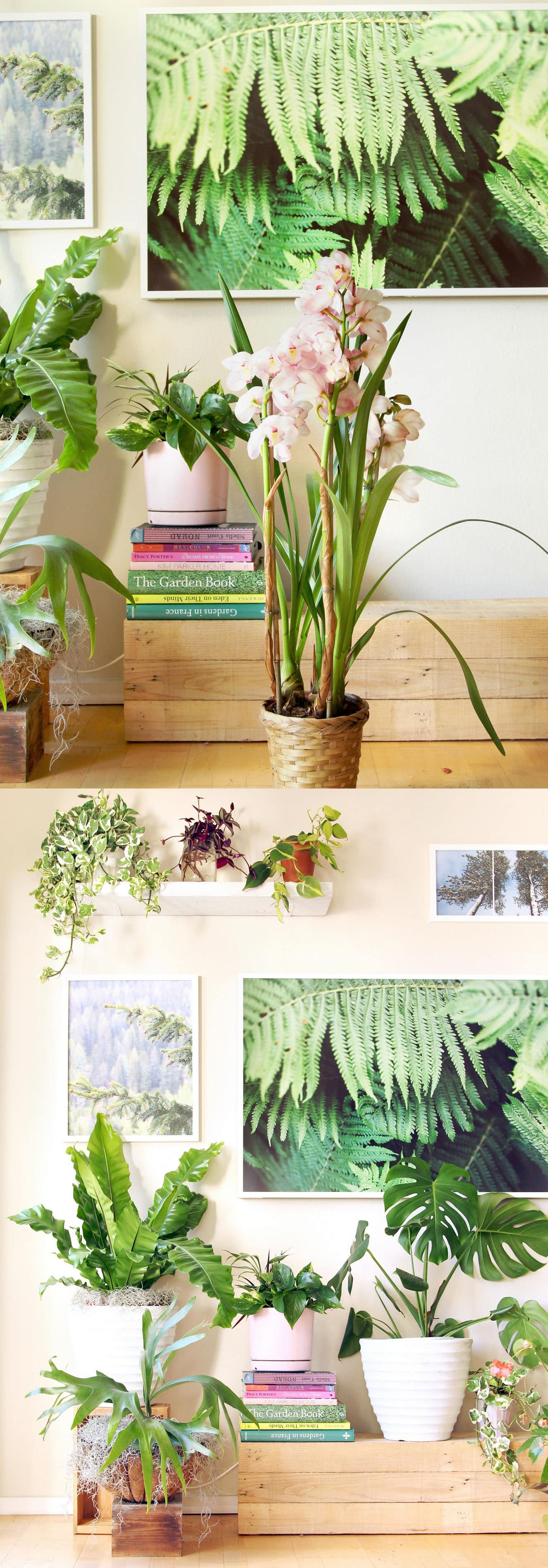 Easy to grow flowers indoors thin blog for Easy to grow houseplants