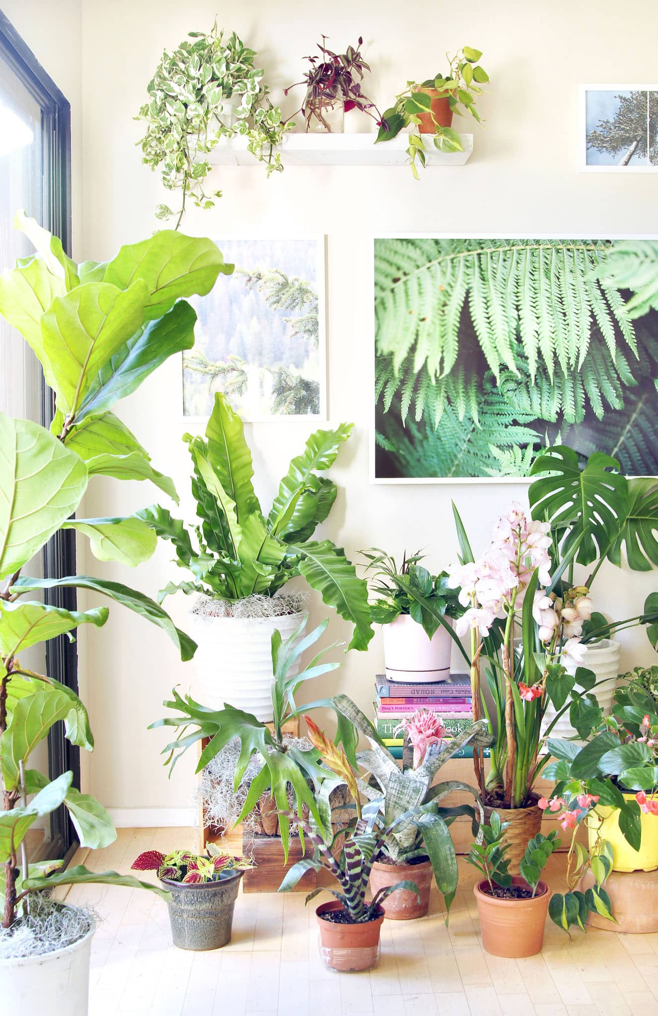 18 Most Beautiful Indoor Plants 5 Easy Care Tips A Piece Of