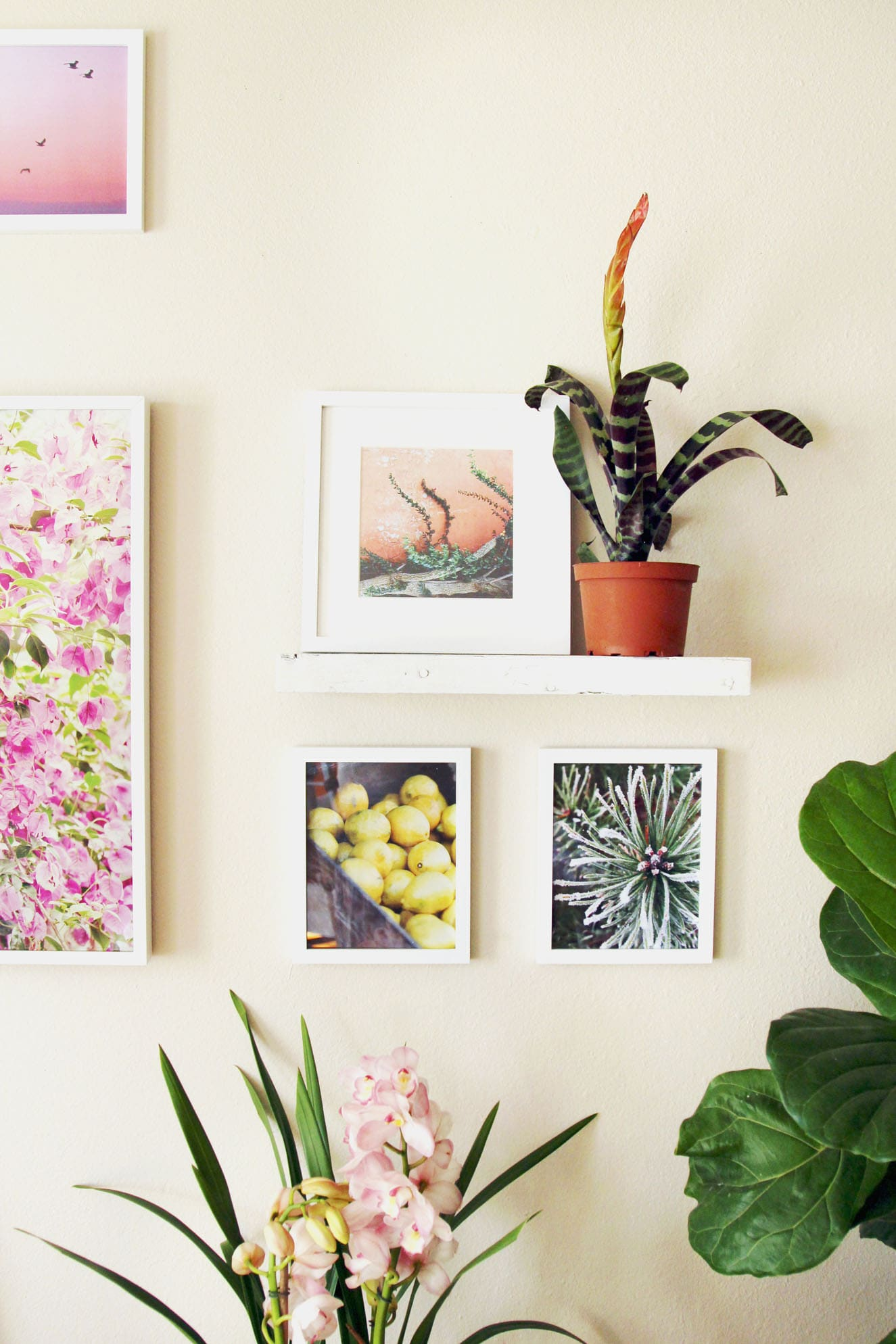 Indoor Plants Are Here S A Guide On The Best Kill Proof We Love They Not Only Beautiful But Also Able To Clean Air