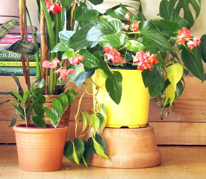 18 Most Beautiful Indoor Plants Amp 5 Easy Care Tips