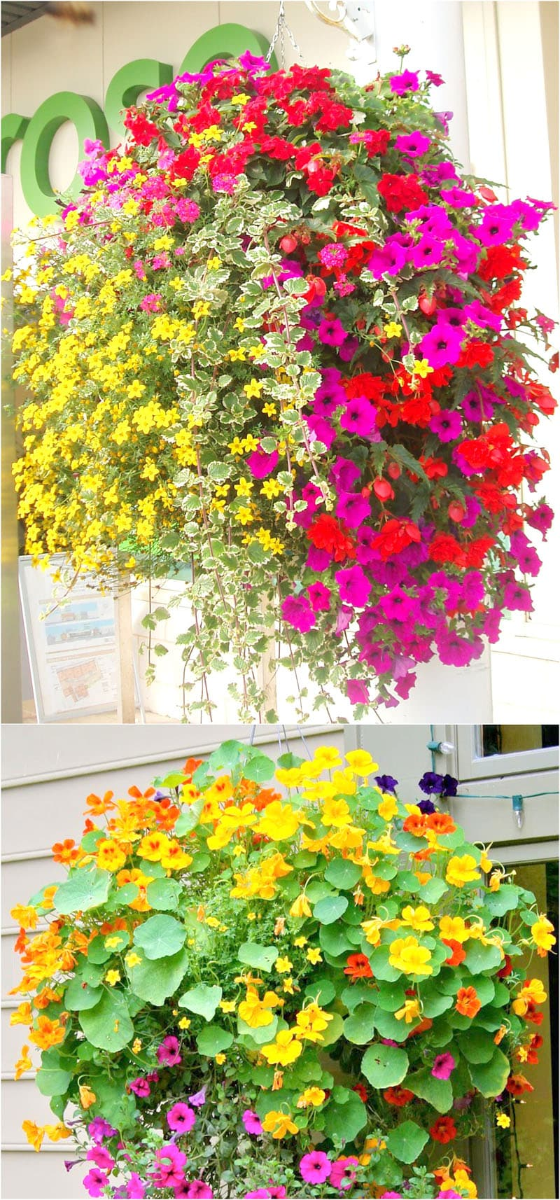 Best plants and flowers for hanging baskets in full sun or half day sun.
