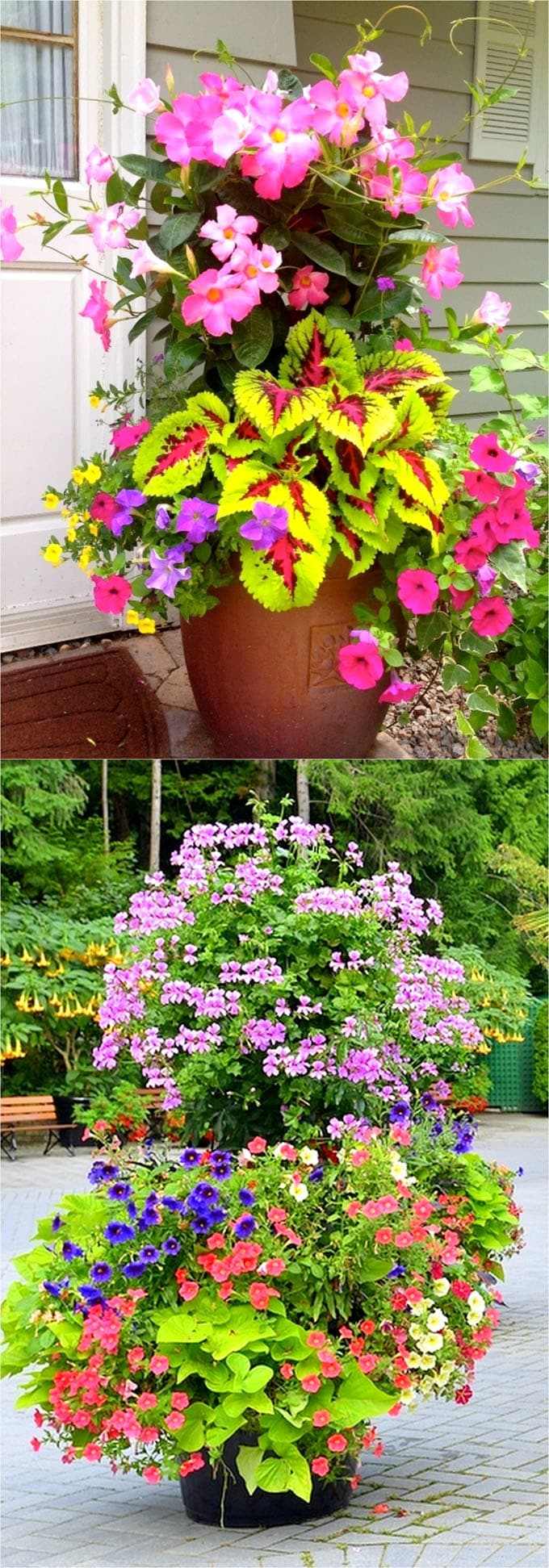Colorful flower gardening in pots 38 designer plant lists for each celebrate the abundance of colors with flower gardening izmirmasajfo