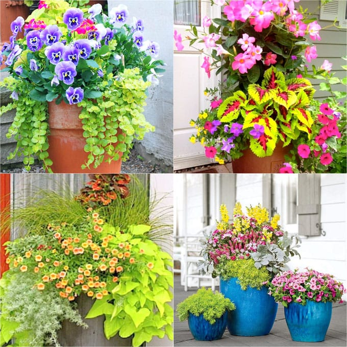 Colorful flower gardening in beautiful mixed pots & planters! Here are 30+ best designer plant lists & combinations for easy sun & shade container garden planting.